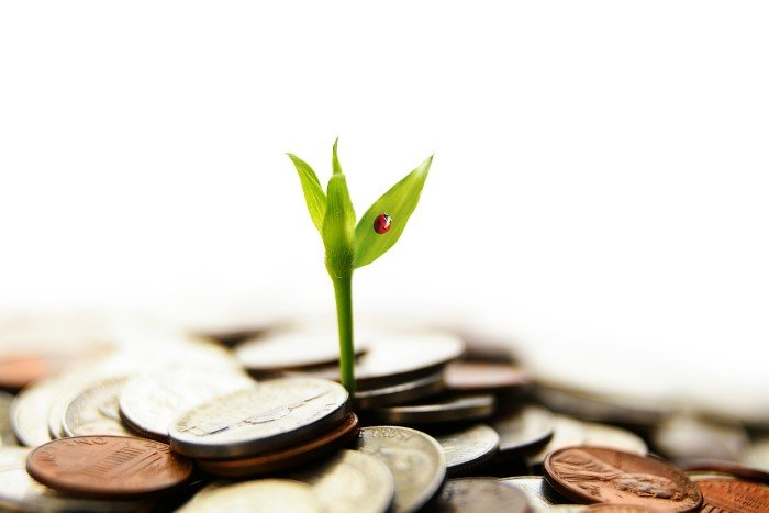 passion: a small plant growing out from a pile of coins